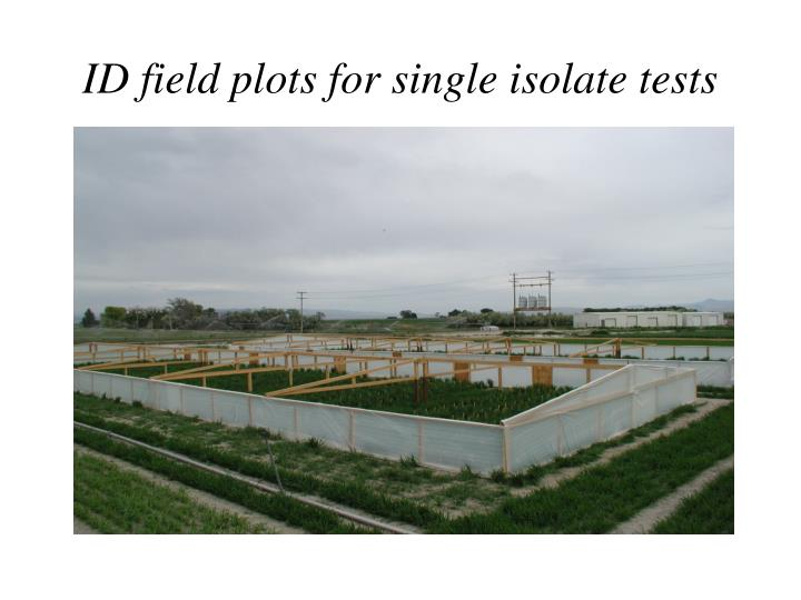 ID field plots for single isolate tests