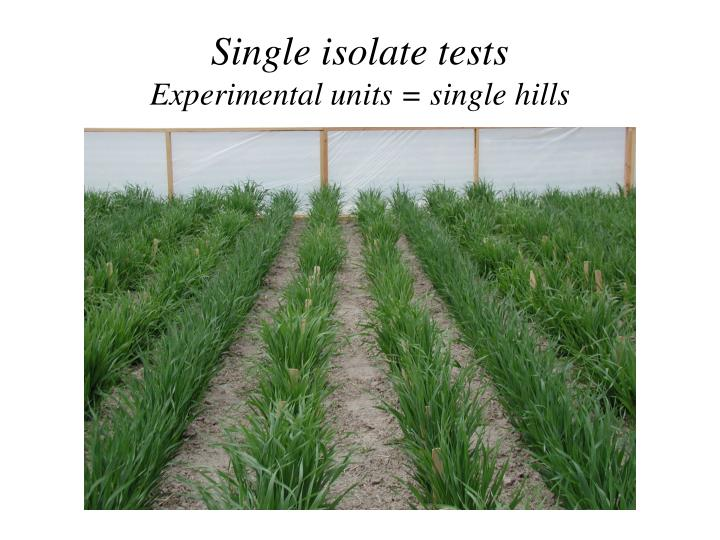 Single isolate tests