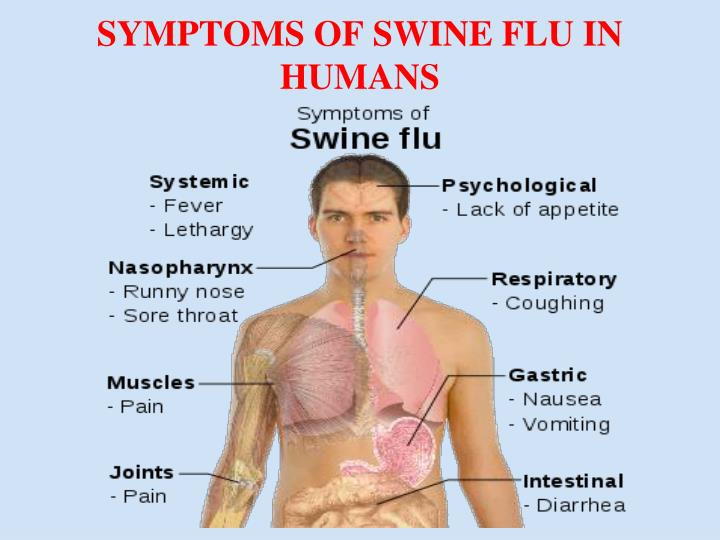 SYMPTOMS OF SWINE FLU IN HUMANS