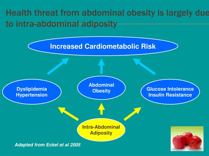 Health threat from abdominal obesity is largely due to intra-abdominal adiposity