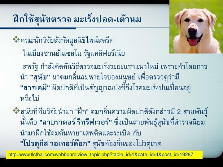 ฝึกใช้สุนัขตรวจ มะเร็งปอด-เต้านม