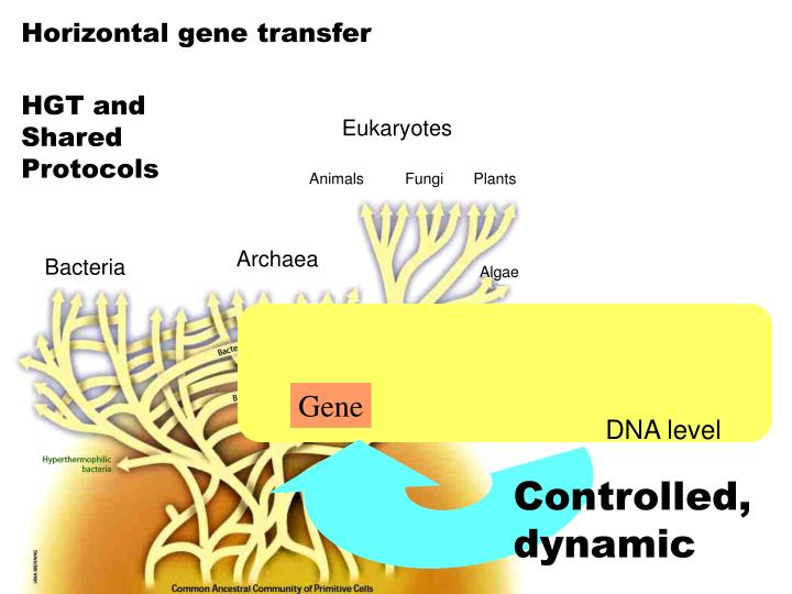 Eukaryotes