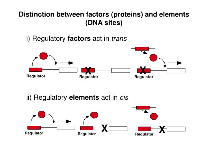 Distinction between factors (proteins) and elements (DNA sites)