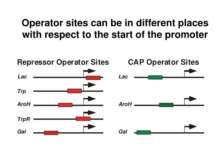 Operator sites can be in different places with respect to the start of the promoter