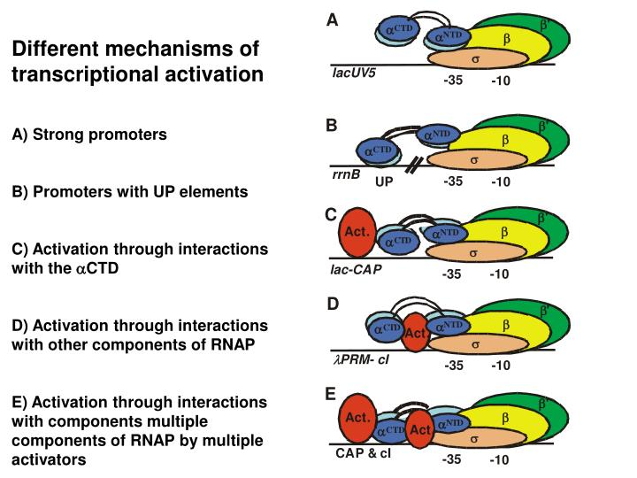 Different mechanisms of transcriptional activation