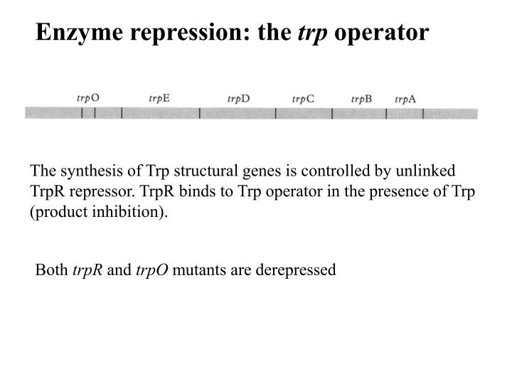 Enzyme repression: the