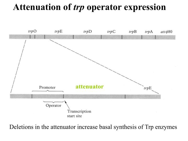 Attenuation of