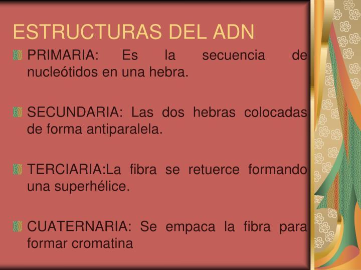 ESTRUCTURAS DEL ADN