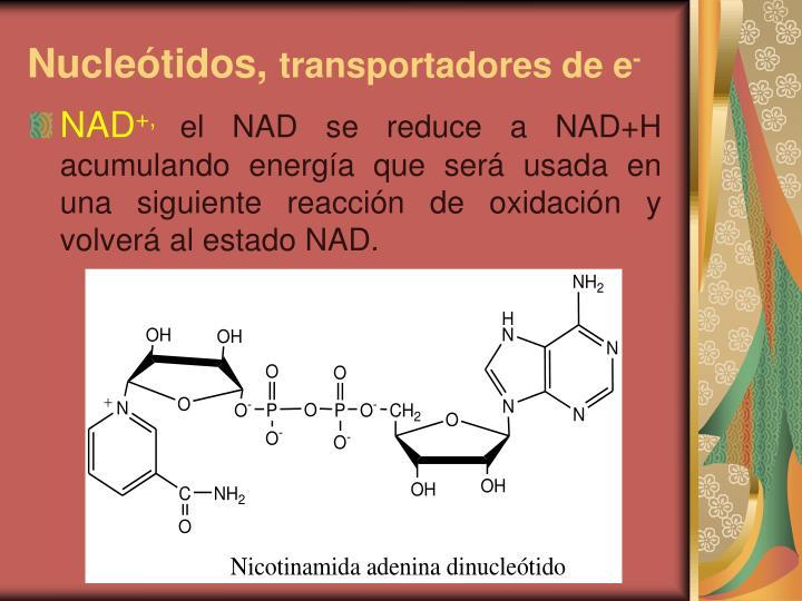 Nucleótidos,