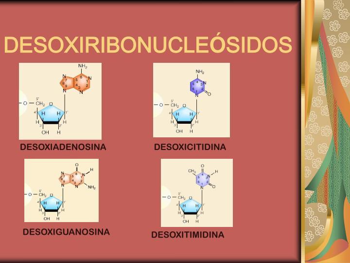 DESOXIRIBONUCLE