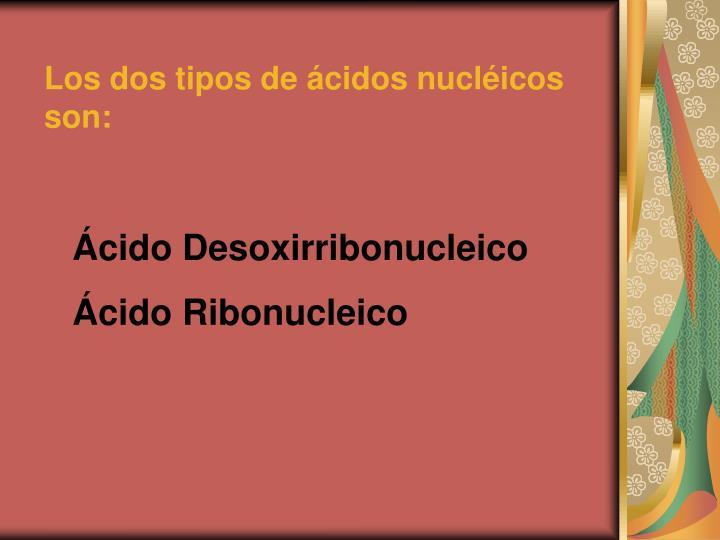 Los dos tipos de ácidos nucléicos son: