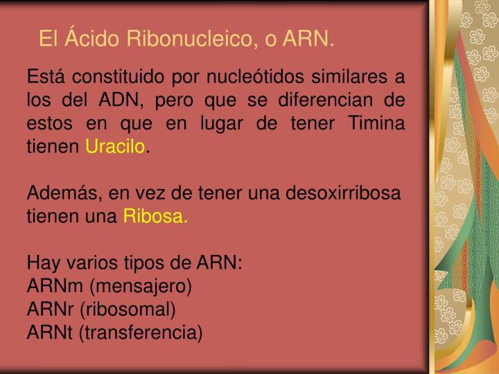 El Ácido Ribonucleico, o ARN.