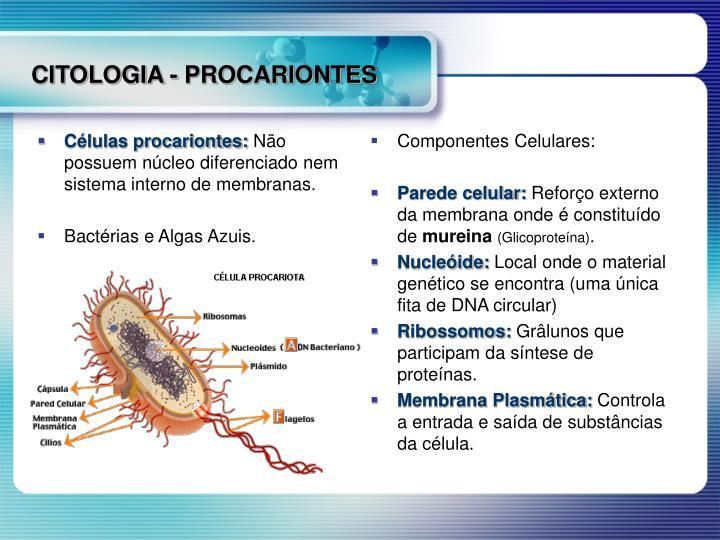 Células procariontes: