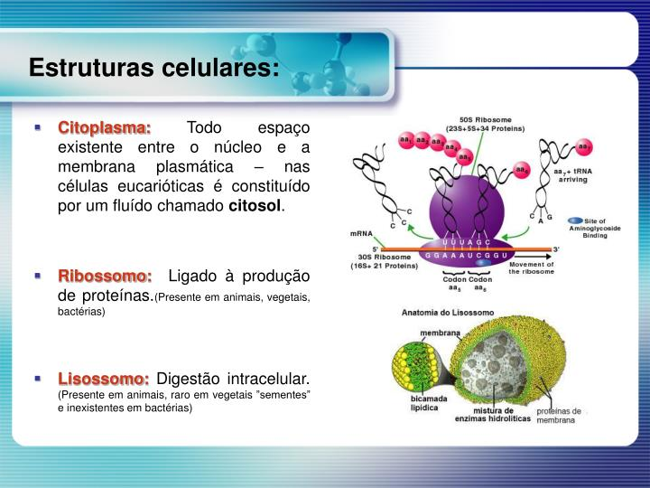 Citoplasma:
