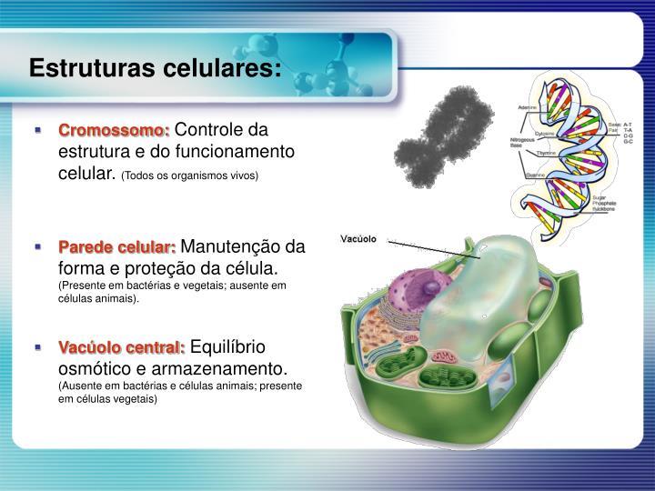 Cromossomo: