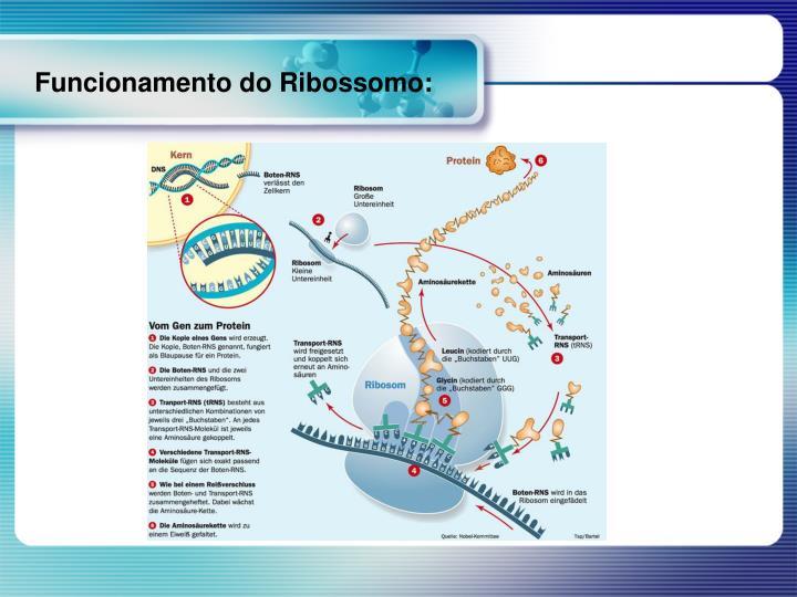 Funcionamento do Ribossomo: