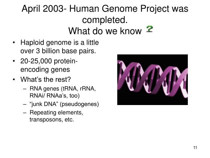 April 2003- Human Genome Project was completed.