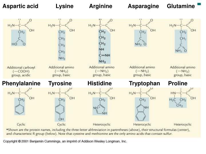 Aspartic acid           Lysine          Arginine          Asparagine     Glutamine
