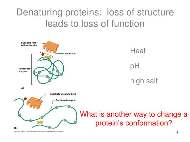 Denaturing proteins:  loss of structure leads to loss of function