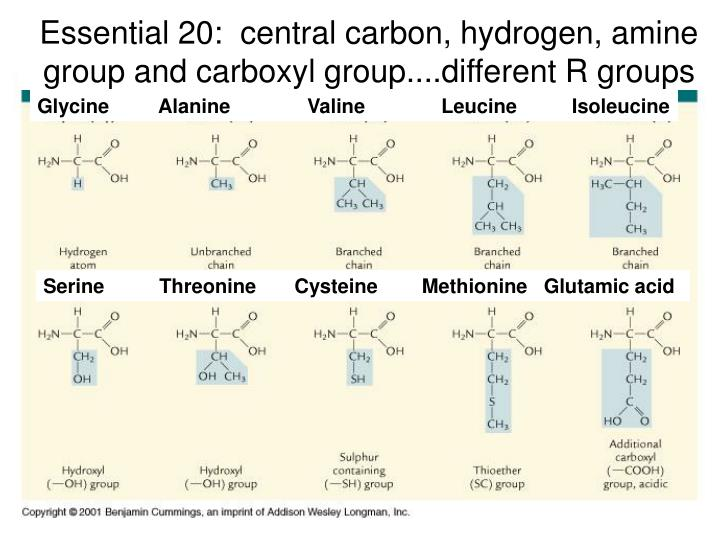 Essential 20:  central carbon, hydrogen, amine group and carboxyl group....different R groups