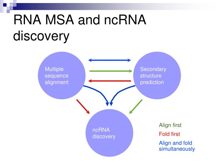 RNA MSA and ncRNA discovery
