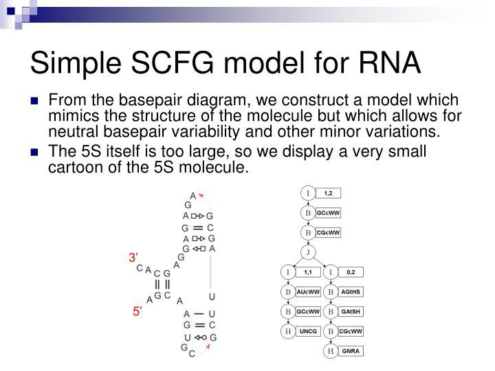 Simple SCFG model for RNA