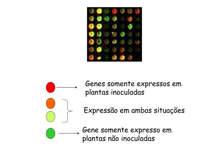 Genes somente expressos em