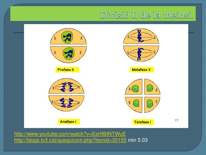 Divisió II de la meiosi.