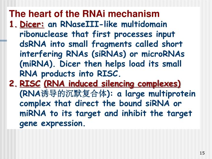 The heart of the RNAi mechanism