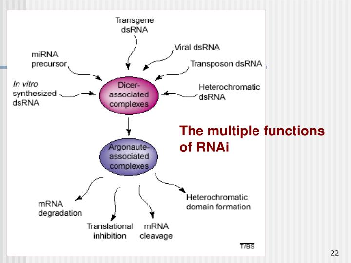 The multiple functions of RNAi