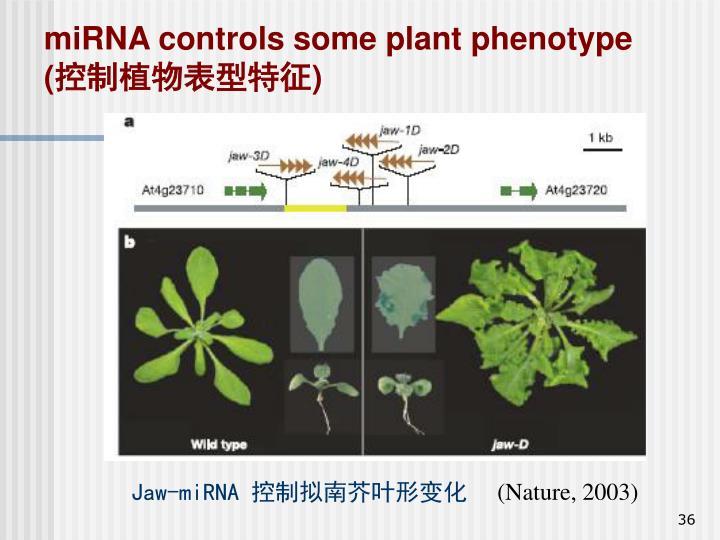 miRNA controls some plant phenotype (