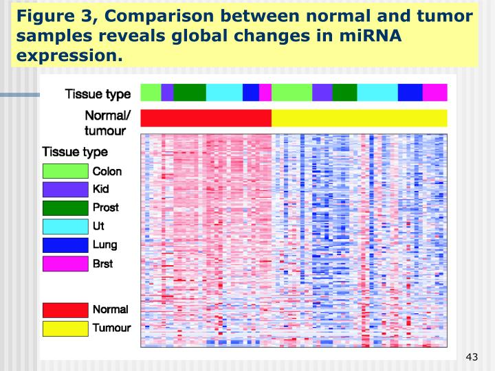 Figure 3, Comparison between normal and tumor samples reveals global changes in miRNA expression.