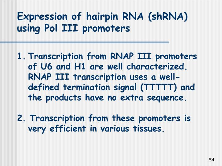 Expression of hairpin RNA (shRNA) using Pol III promoters