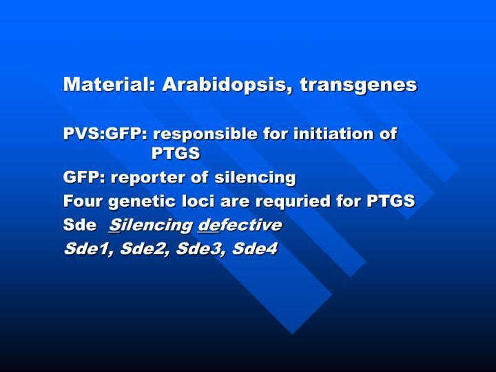 Material: Arabidopsis, transgenes