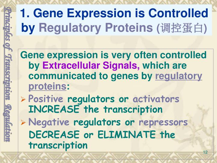 Principles of  Transcription  Regulation