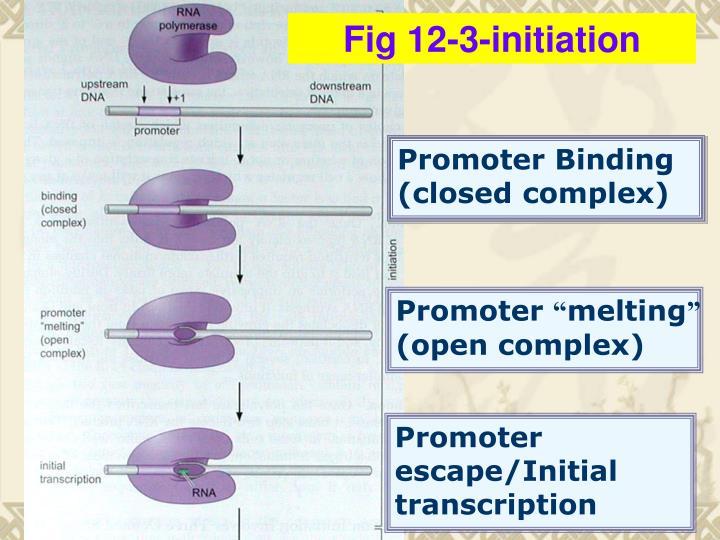 Fig 12-3-initiation