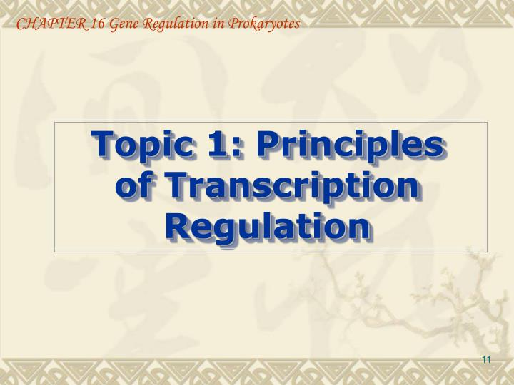 CHAPTER 16 Gene Regulation in Prokaryotes