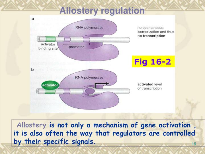 Allostery regulation