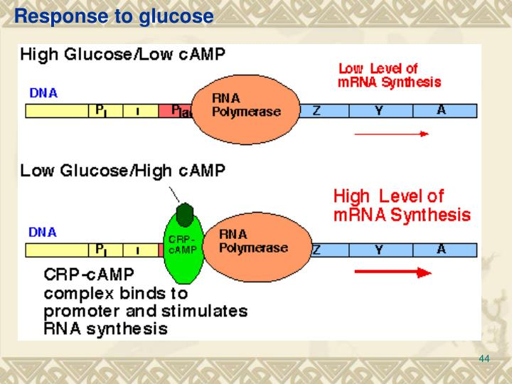 Response to glucose
