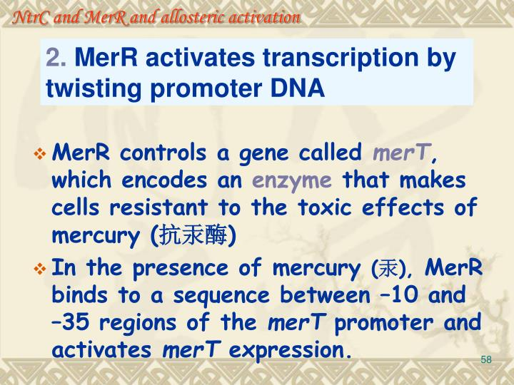 NtrC and MerR and allosteric activation