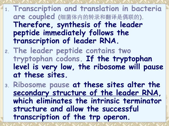 Transcription and translation in bacteria are coupled