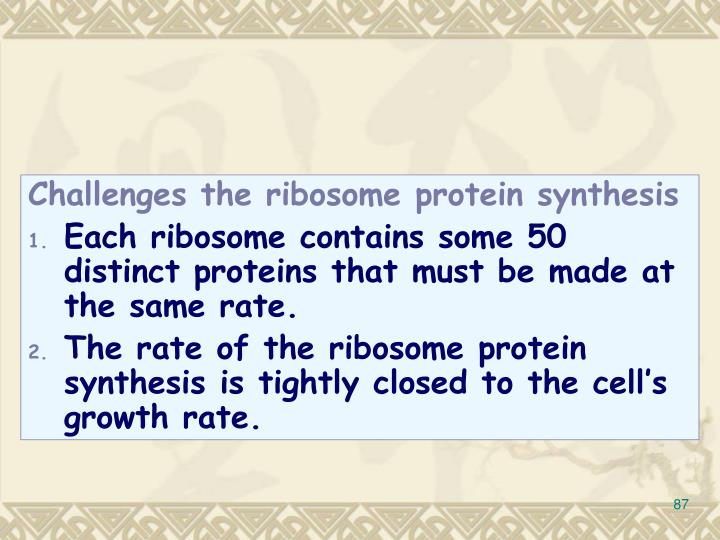Challenges the ribosome protein synthesis