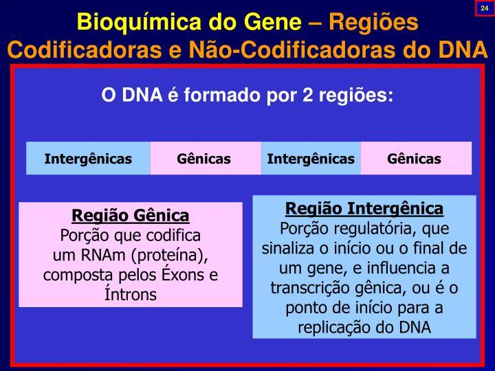 Bioquímica do Gene