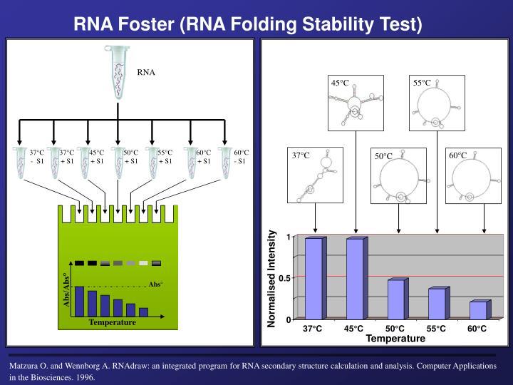 RNA Foster (RNA Folding Stability Test)