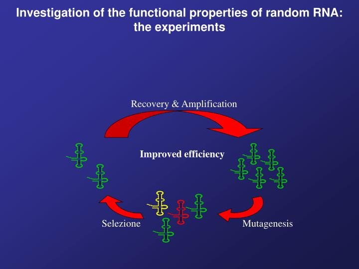 Investigation of the functional properties of random RNA: