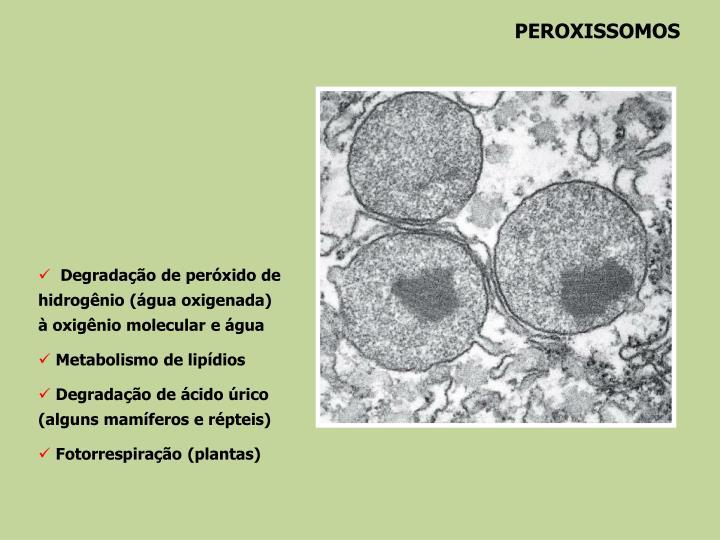 PEROXISSOMOS
