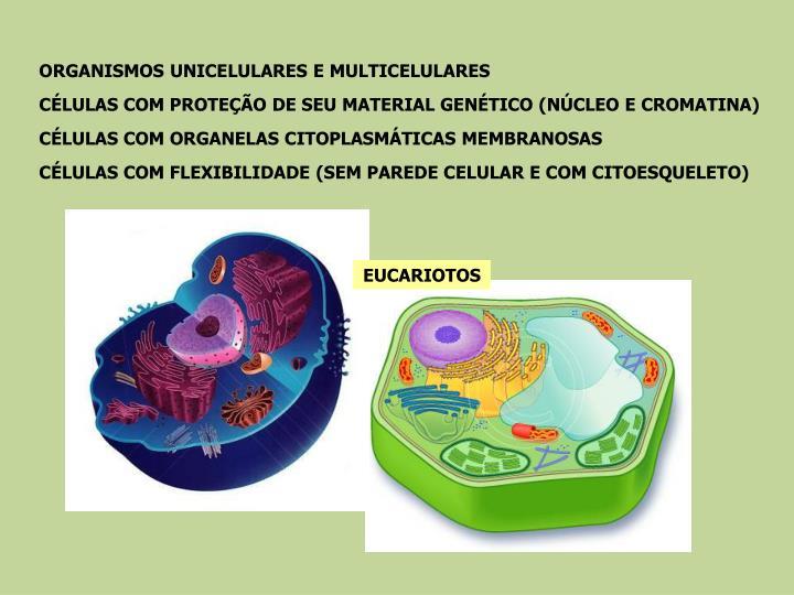 ORGANISMOS UNICELULARES E MULTICELULARES
