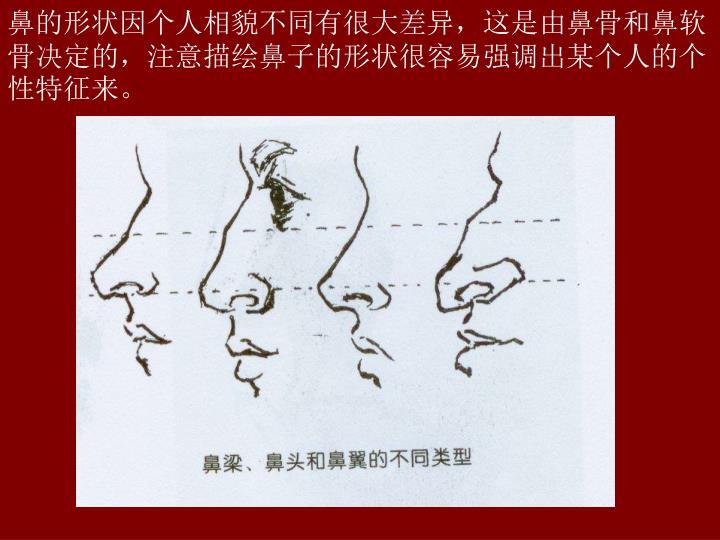 鼻的形状因个人相貌不同有很大差异,这是由鼻骨和鼻软骨决定的,注意描绘鼻子的形状很容易强调出某个人的个性特征来。
