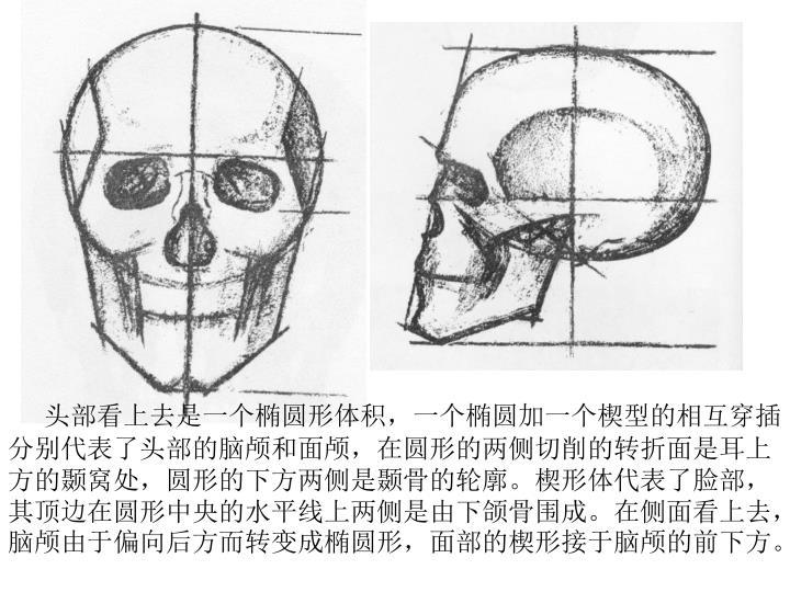 头部看上去是一个椭圆形体积,一个椭圆加一个楔型的相互穿插分别代表了头部的脑颅和面颅,在圆形的两侧切削的转折面是耳上方的颞窝处,圆形的下方两侧是颞骨的轮廓。楔形体代表了脸部,其顶边在圆形中央的水平线上两侧是由下颌骨围成。在侧面看上去,脑颅由于偏向后方而转变成椭圆形,面部的楔形接于脑颅的前下方。