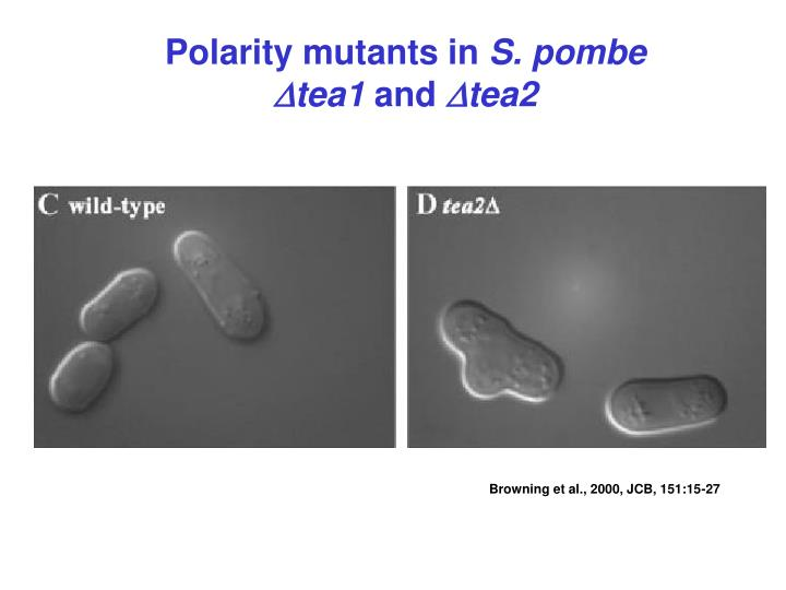 Polarity mutants in